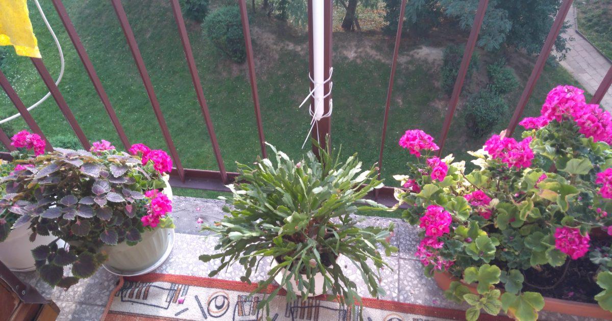 Balkon 1, fot.3