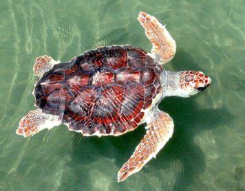 Żółwie – prehistoryczne istoty